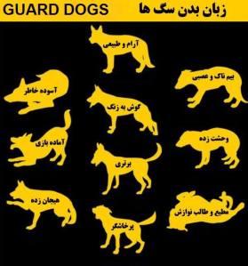 زبان سگها