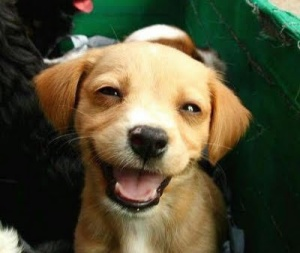 dog can laugh