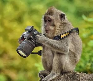 شادی عکاس