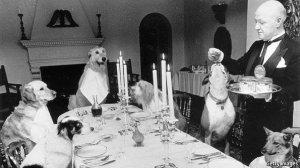مهمانی سگها